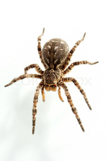 Not all people equally well concern to spiders