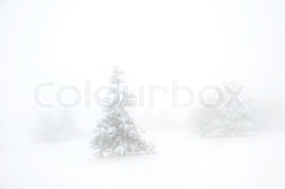 Snow covered tree on Ay Petri mountain in the fog.  Ukraine