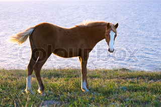 Horse on the pasture in front of the sea