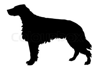 silhouette of the setter isolated on white background