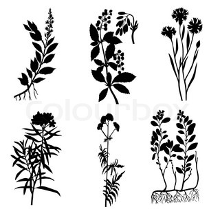 vector silhouettes of the medicinal plants on white background