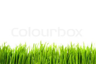 Green Grass mit Wassertropfen auf weißem Hintergrund
