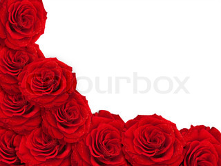 fresh red roses over white with copy space