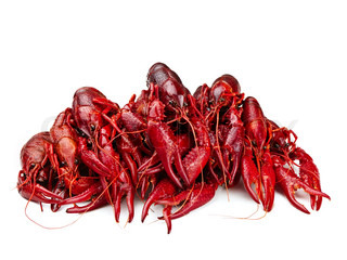 red boiled crawfishes over the white background