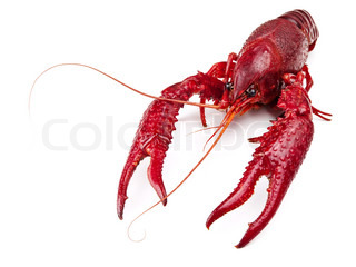 red boiled crawfish over the white background