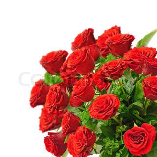buket røde roser over hvide baggrund