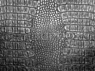Black crocodile leather texture closeup background.