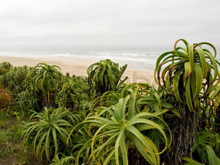 Billede af 'plant, indean ocean, plante'