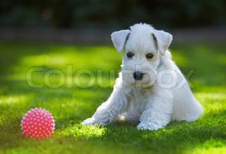 Billede af 'dyr, græsplæne, bold'