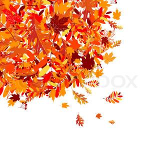 Vektor af 'efterår, art, ahorn'