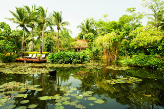 Pond surrounded by lush tropical plants