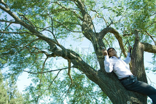 ©Eric Audras/AltoPress/Maxppp ; Businessman using cell phone in tree