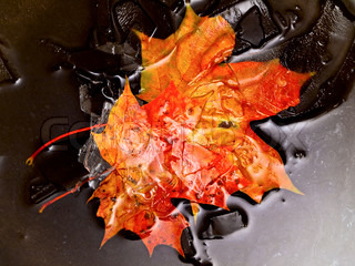 maples leaves in water and ice at the dark background