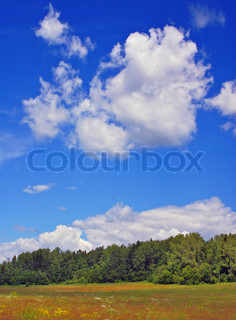 Summer rural landscape with cloudy sky dry grass and trees stock photo colourbox - Impressive house with tranquil environment to get total relaxation ...