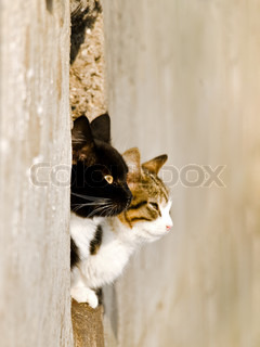 two cats love outdoor in sunny day