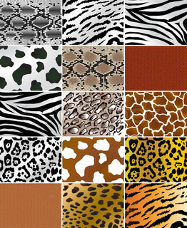 Illustation of different animals and snakes skins