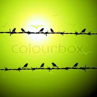 Birds on wire silhouette