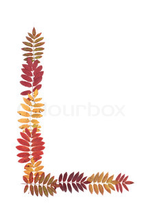 Letter of the alphabet L put from sheet of rowanberry on white background