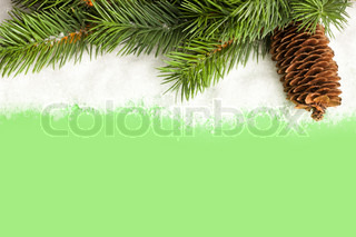branch of Christmas tree with pinecone