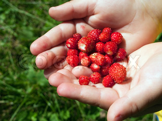 Berry food - human hand holding red strawberry