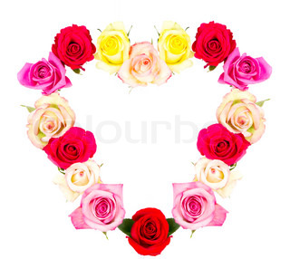 colorful roses in heart shape isolated on white