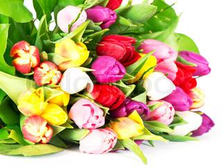 buket af farverige tulipaner på hvid baggrund
