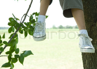 ©Sigrid Olsson/AltoPress/Maxppp ; Child sitting in tree, cropped view, knee down