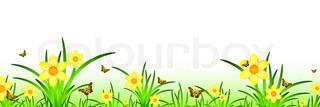 sommer banner med narcisser eng natur og sommerfugle .