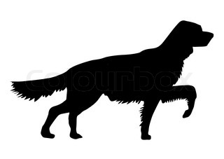 vector silhouette of the setter on white background