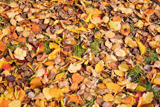 Yellow, red, orange and brown leaves on a background of green grass (texture)