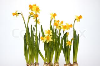 Billede af 'påske, Holiday, Festival'