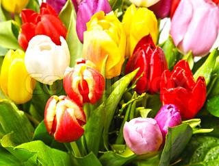 Billede af 'blomst, ligner, bladhang'