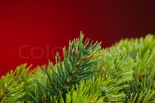 branch of Christmas tree on red
