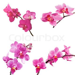 sæt lyserød orkidé isoleret på hvidt