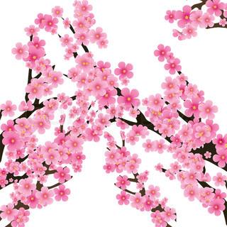 Kirschblüte , Blumen von sakura -, Baum- Brunch, Frühjahr Hintergrund , Vektor-Illustration