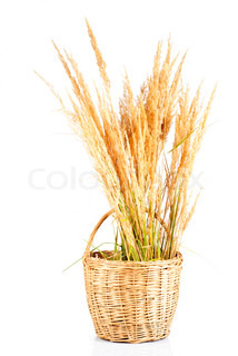Dry grass in basket over white background, rural still life