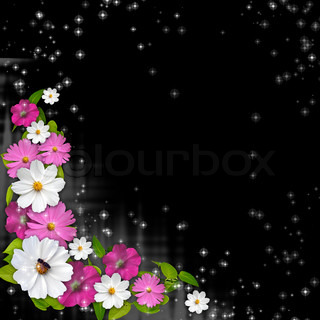 Black  background with daisy flowers