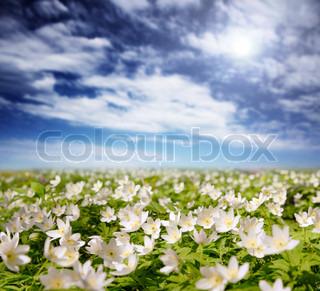 Foråret er tiden for denne smukke blomst