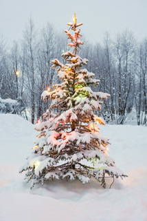 ?James Hardy/AltoPress/Maxppp ; Snow-covered tree decorated with Christmas lights