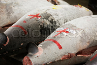 ?James Hardy/AltoPress/Maxppp ; Frozen tuna displayed with numbering before auction at Tsukiji fish market, Tokyo, Japan