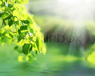 Green leaves with sun ray in spring time