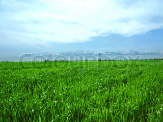 green, grass, herb, plant, nature, growth, nobody, color, blade, backgrounds, image, freshness, horizontal, area, close-up, conservation, vibrant, spring, environmental, scene, environment, macro, outdoors, field, focus, medicine, foliage, lush, herbal, la