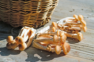 Basket with eatable mushrooms on a table