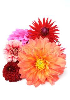Billede af 'smuk, blomstret, natur'