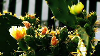 green summer cactus with yellow prickles and flowers, flora