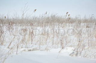 Winter steppe with grass coveed by snow. Horizontal photo