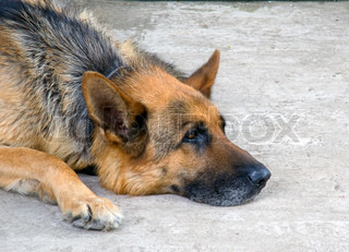 sad shepherd is lying on the ground