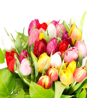 Bouquet of assorted tulips