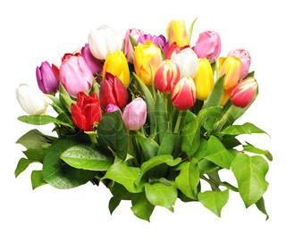 buket af farverige tulipaner isoleret på hvidt