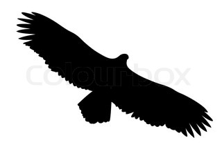 Vektor Silhouette des gefräßigen Vogel auf weißem Hintergrund